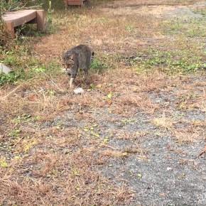 [250SB/Dトラ] CVK34キャブセッティングと葛城山の猫