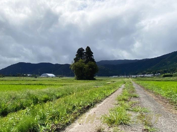 Totoro tree shiga 01