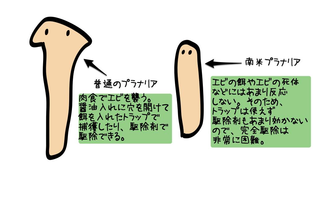 Nanbei planaria