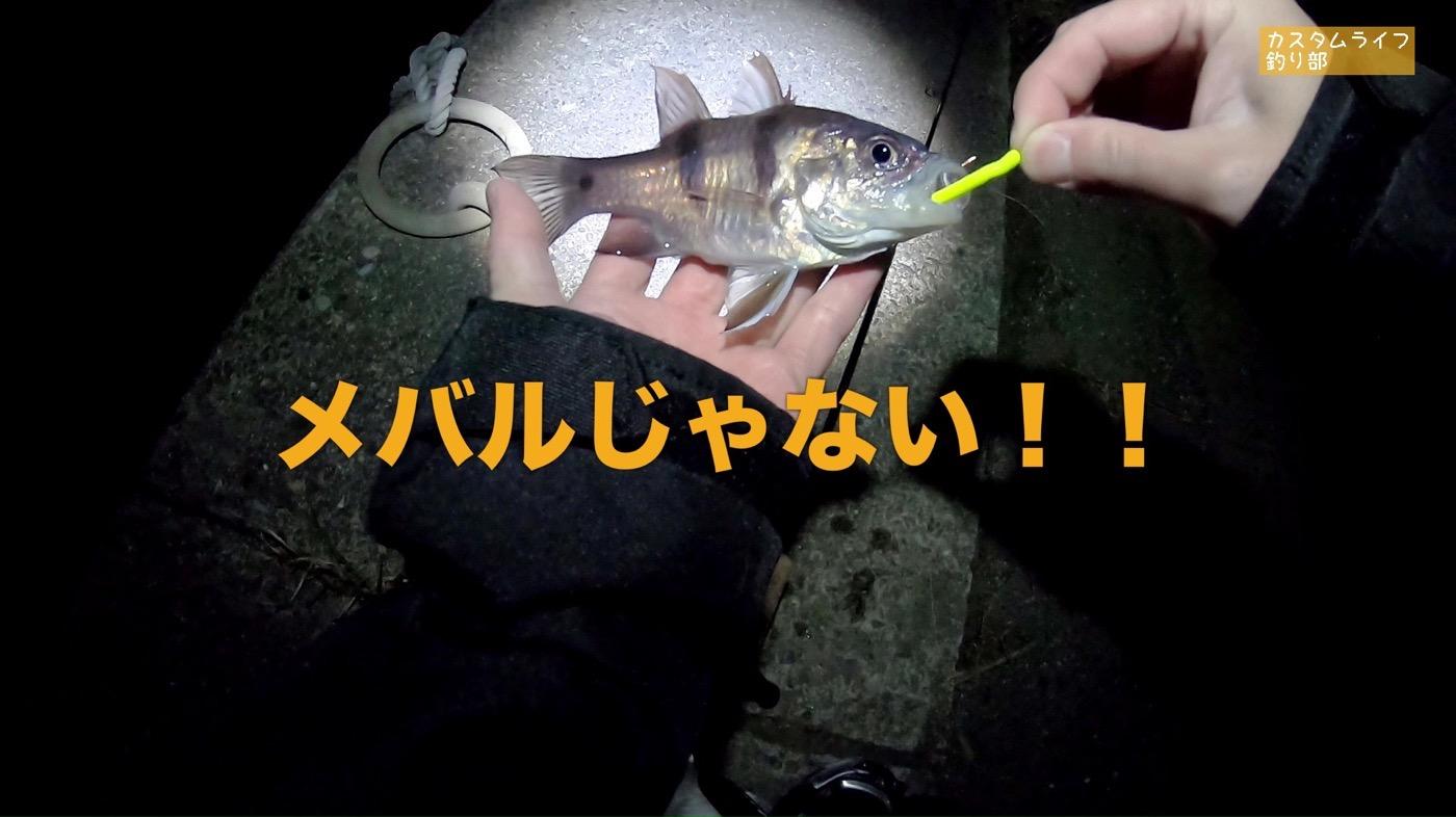 Nanki rockfishing 08